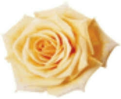 Fleuriste Cartierville - Florist